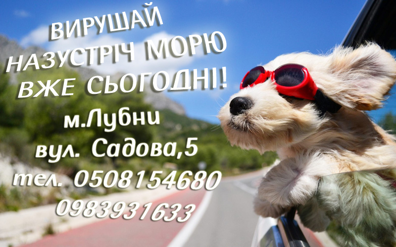 dog travel 11072019